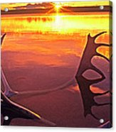 Panorama Caribou Antlers Whitefish Lake Nwt Canada Acrylic Print
