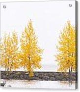 Panorama Tree Acrylic Print