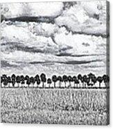 Panoramic Noir Acrylic Print