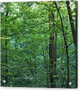 Panoramic Shot With Green Trees Acrylic Print