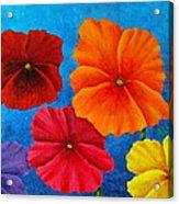 Pansies For Rosalina Acrylic Print