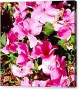 Pansies Garden Acrylic Print
