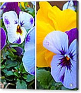 Pansies In Stereo Acrylic Print