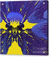Pansy By Jammer Acrylic Print