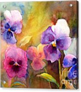 Pansy Party Acrylic Print