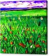 Papaveri Acrylic Print