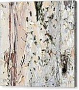 Paper Bark Astract Acrylic Print