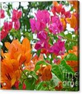 Paper Flower Acrylic Print