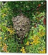 Paper Hornet Nest Acrylic Print