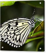 Paper Kite Butterfly On A Leaf  Acrylic Print