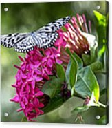 Paper Kite On Fluid Blossoms Acrylic Print