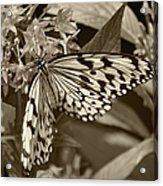 Paper Kite On Frangipani Flowers Acrylic Print