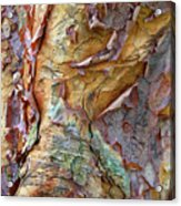 Paperbark Abstract Acrylic Print