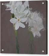 Paperwhites Still Life 1 Acrylic Print