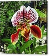 Paph Fiordland Sunset Orchid Acrylic Print