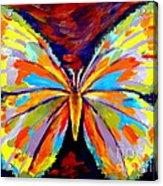 Papillon Colore Acrylic Print