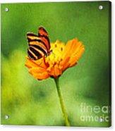 Papillon Acrylic Print by Darren Fisher