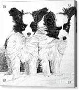 Papillon Puppies Acrylic Print