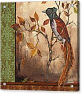 Paradise Flycatcher Acrylic Print