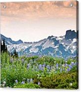 Paradise Meadows And The Tatoosh Range Acrylic Print