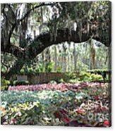 Paradise Perceived Acrylic Print