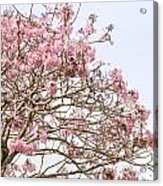 Parakeets Hiding In The Flowers Acrylic Print