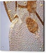 Parasitic Mites 501 Acrylic Print