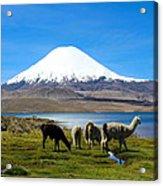 Parinacota Volcano Lake Chungara Chile Acrylic Print