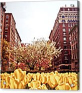 Park Avenue In The Spring  Acrylic Print