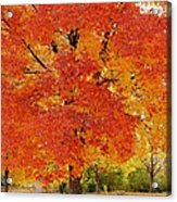 Park In Fall Acrylic Print by Yoshiko Wootten