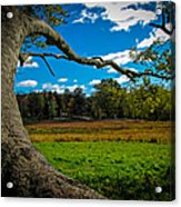 Park In Massachusetts In The Fall Acrylic Print