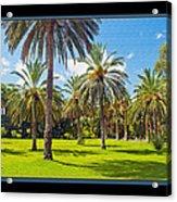 Park Open Area 2 Acrylic Print
