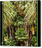Park Palms Acrylic Print