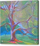 Park Trees 8 Acrylic Print