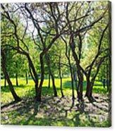 Park Trees Acrylic Print