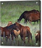 Parker Ranch Horses Acrylic Print