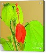 Parlor Maple Flower Acrylic Print