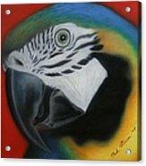 Parrot 1 Acrylic Print