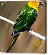 Parrot Beauty Digital Artwork Acrylic Print