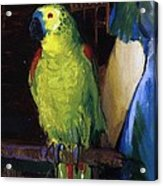 Parrot Acrylic Print by George Wesley Bellows