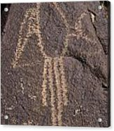 Parrot Glyph At Petroglyph National Monument Acrylic Print