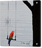 Parrot On A Swing Acrylic Print