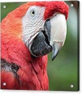 Parrot Profile Acrylic Print
