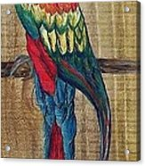 Parrot - Scarlet Macaw Acrylic Print