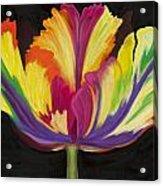 Parrot Tulip 2 Acrylic Print