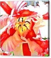 Parrot Tulip Acrylic Print