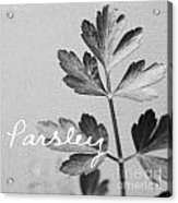 Parsley Acrylic Print