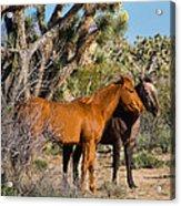 Partners - Wild Horses Acrylic Print