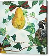 Partridge And  Pears  Acrylic Print
