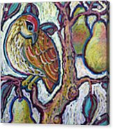Partridge In A Pear Tree 1 Acrylic Print
